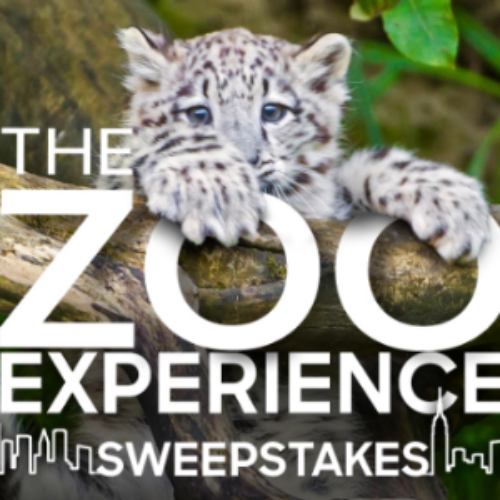 Win a Trip to NYC & The Bronx Zoo
