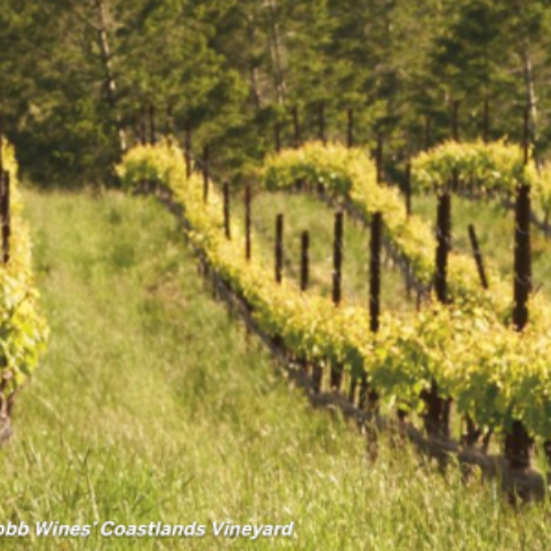 Win a Weekend Getaway to Sonoma Valley Wine Country