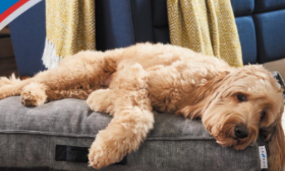 Win 1 of 3 La-Z-Boy Pet Beds