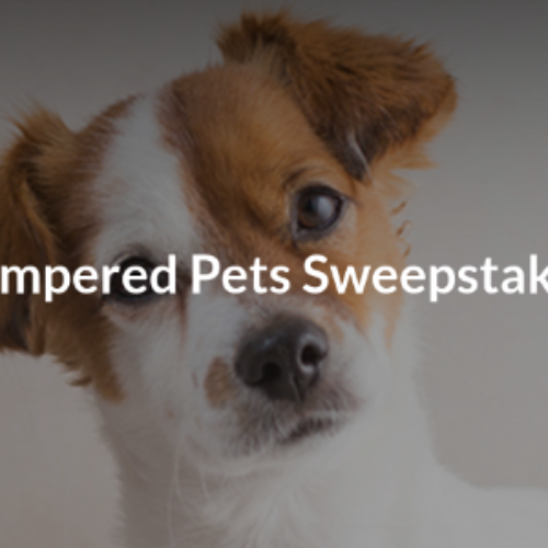 Win a Home Pet Spa