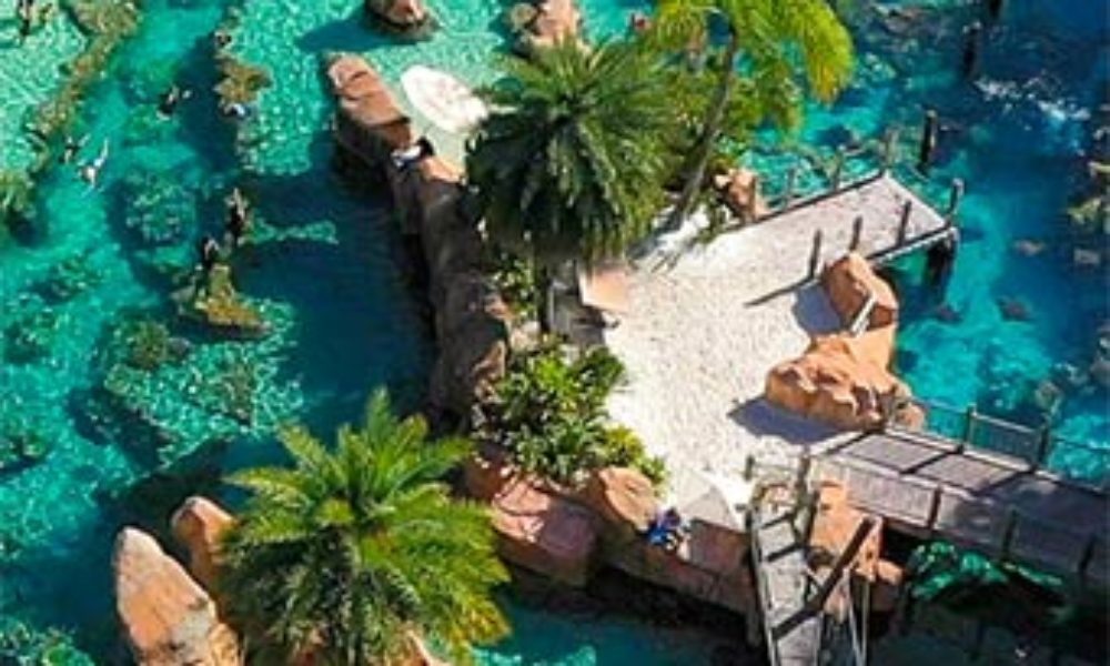 Win a Trip to Discovery Cove in Orlando from Dippin' Dots